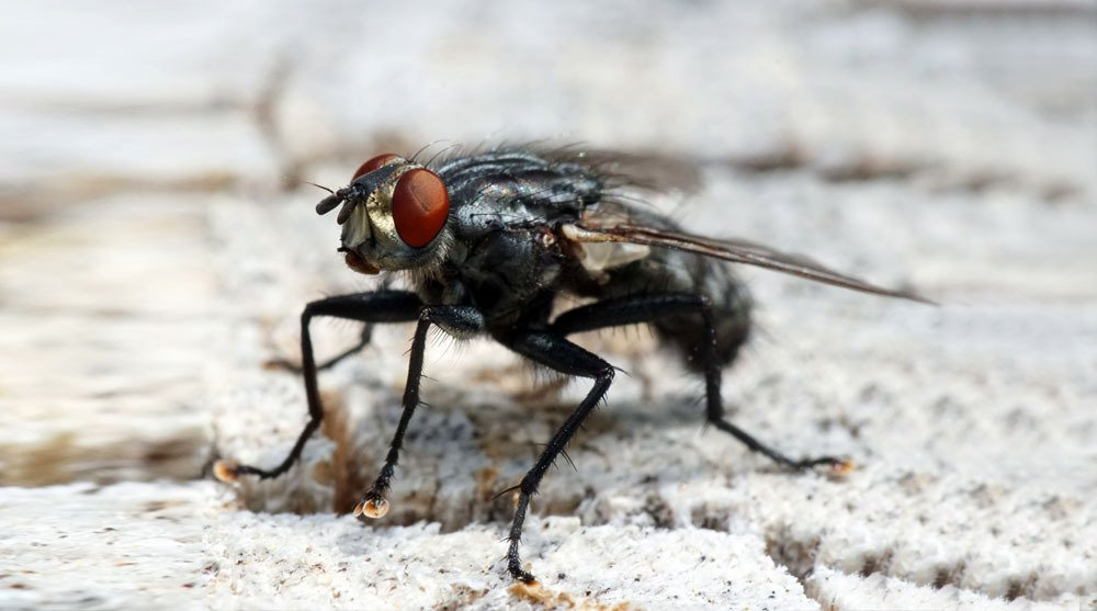 Flies And Mosquitos Control