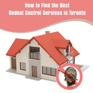 How to Find the Best Rodent Control Services in Toronto