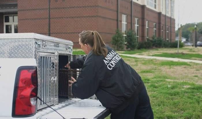 Do's and Don'ts When Choosing Animal Control Services