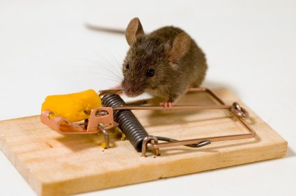 What Alternatives to Poison Are Preferred for Rodent Control?