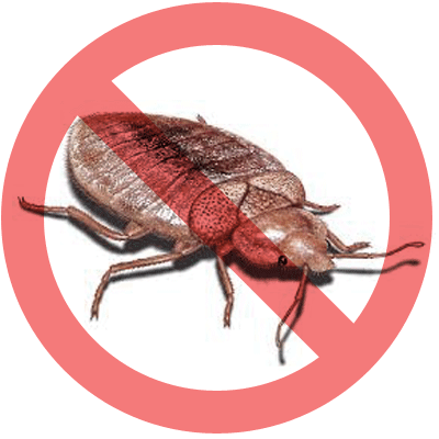 Bed Bugs Solution: Natural Remedy vs. Professional Solutions
