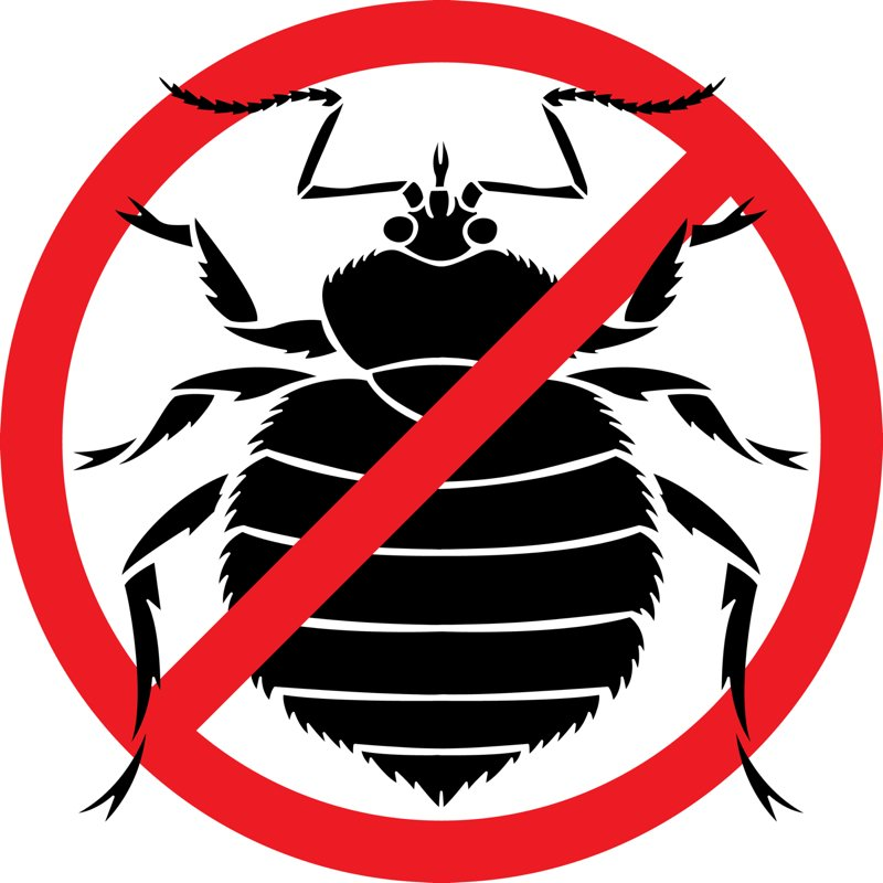 3 Signs of Bed Bugs Infestation You Cannot Ignore