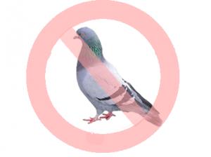 Bird Control Services Toronto