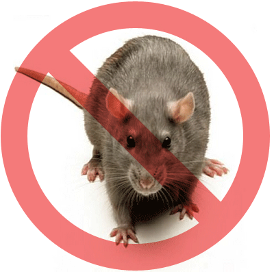 Proven Tips for Rodent Control in Toronto