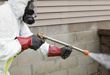 The Do's & Don'ts of Residential Pest Control in Toronto